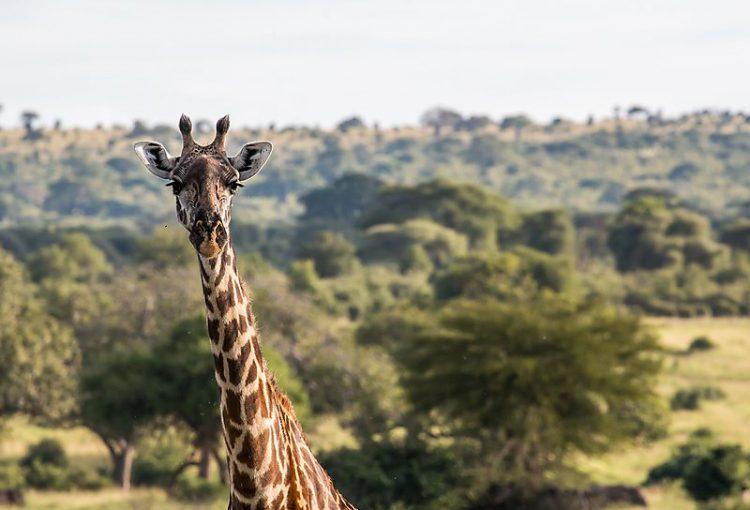 Tanzania-02