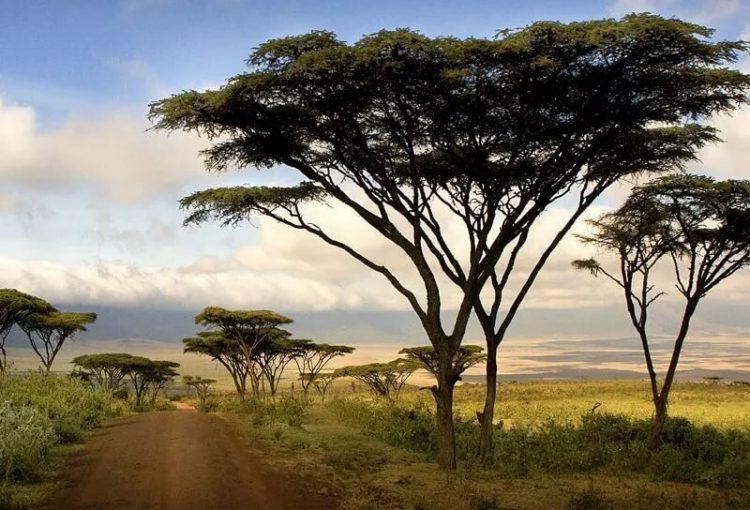 Tanzania_Safari-03