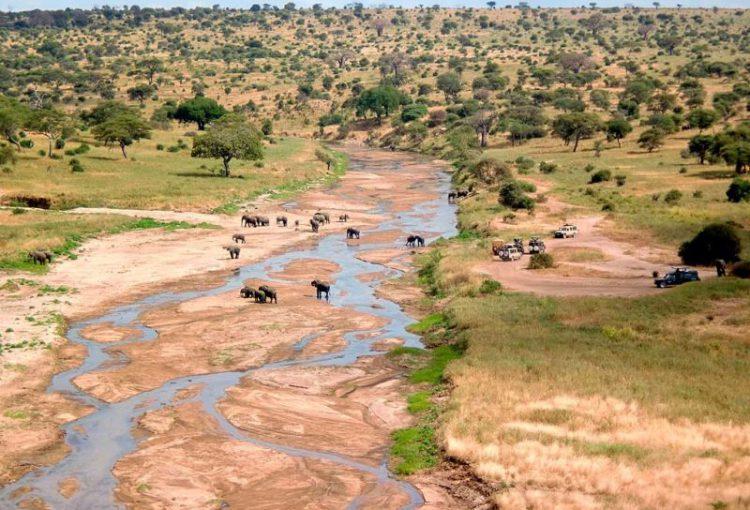 Tanzania_Safari-04