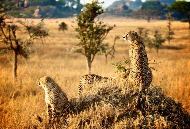 Tanzania_Safari-07