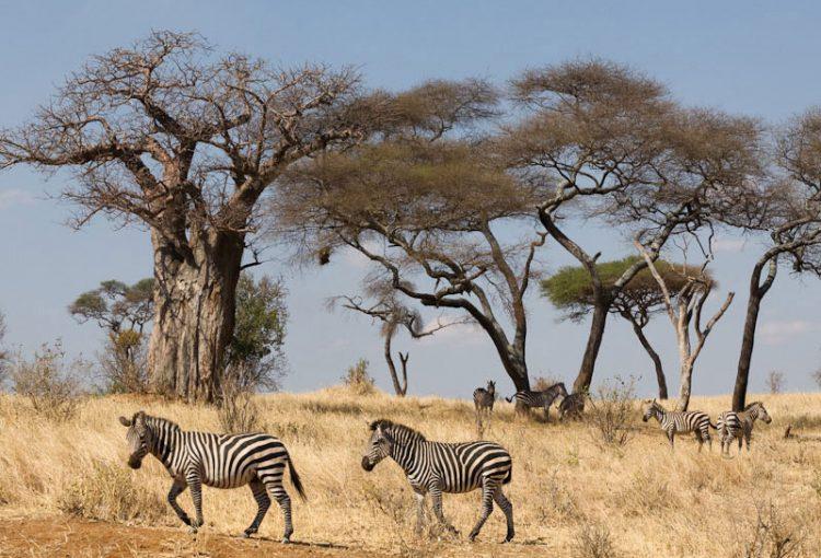 Tanzania_Safari-110