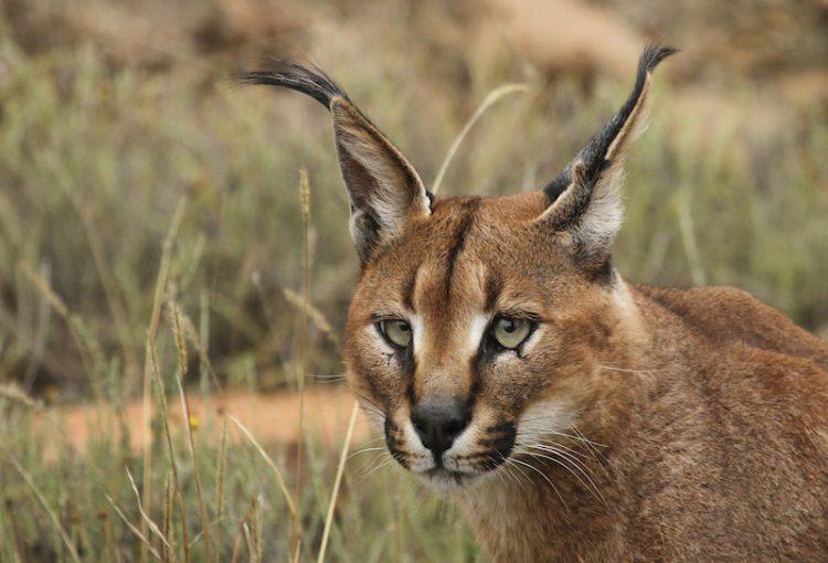 Tanzania_Safari-A01